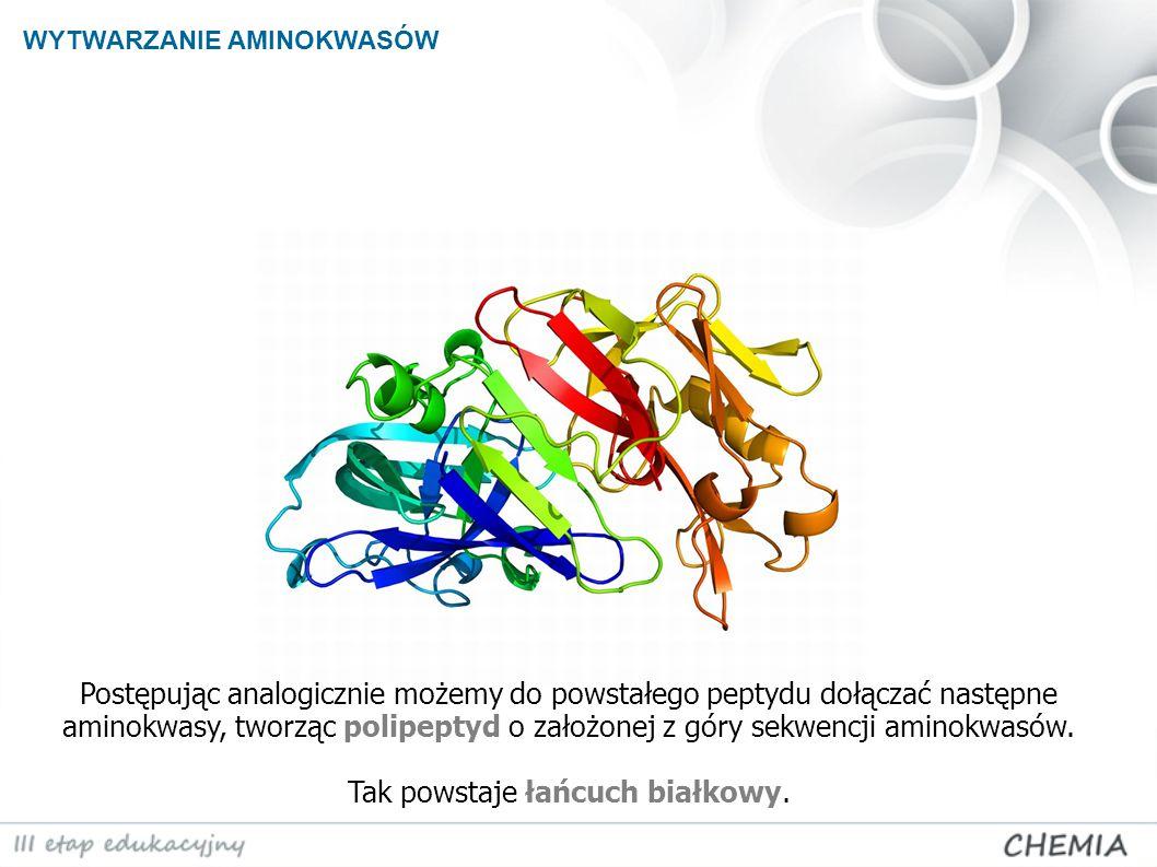 Postępując analogicznie możemy do powstałego peptydu dołączać następne aminokwasy, tworząc polipeptyd o założonej z góry sekwencji aminokwasów. Tak po