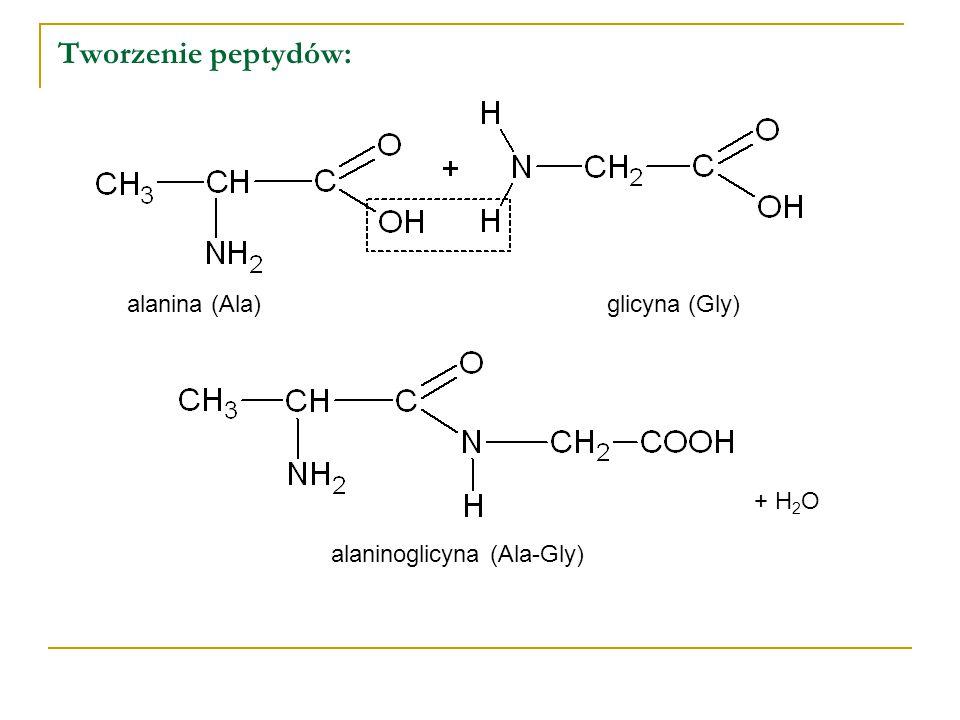 Tworzenie peptydów: alanina (Ala)glicyna (Gly) alaninoglicyna (Ala-Gly) + H 2 O