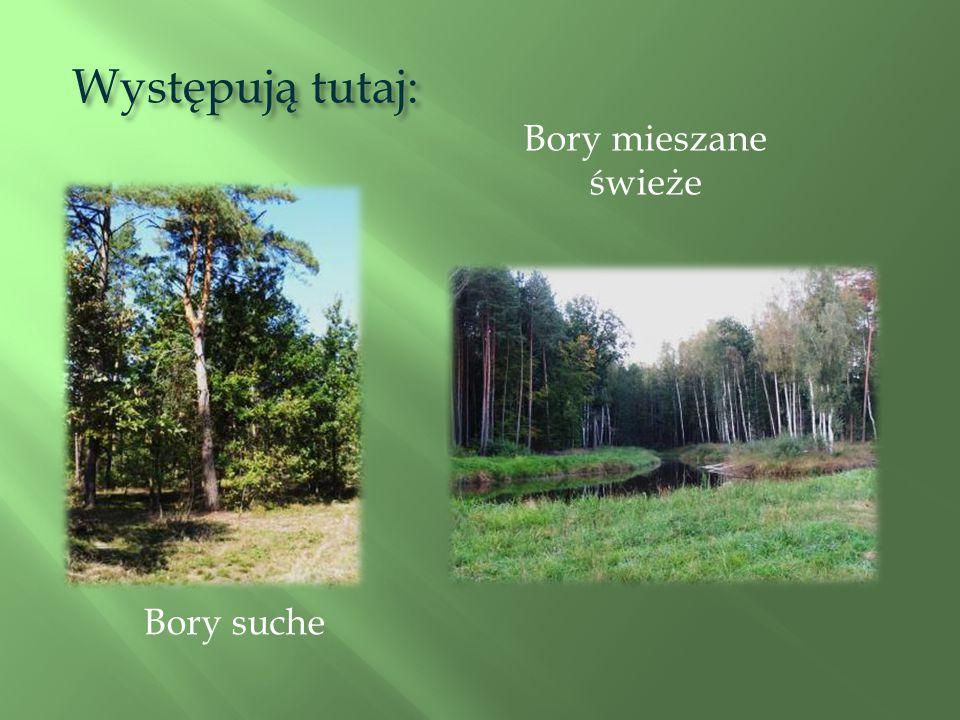 Las, o którym chciałbym opowiedzieć znajduje się w leśnictwie Brzyska Wola w powiecie leżajskim. W jego obrębie został utworzony rezerwat przyrody