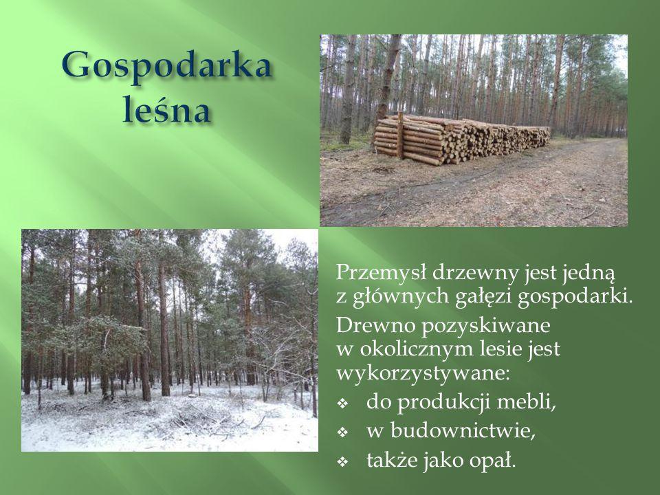 Przemysł drzewny jest jedną z głównych gałęzi gospodarki.