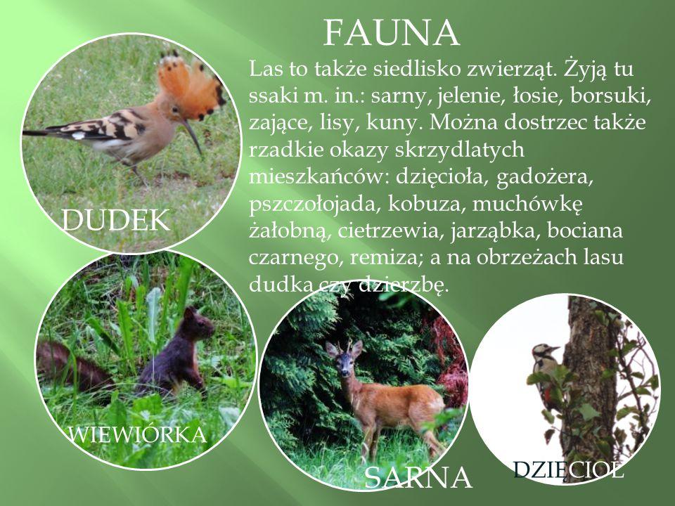 WIEWIÓRKA SARNA DUDEK Las to także siedlisko zwierząt.