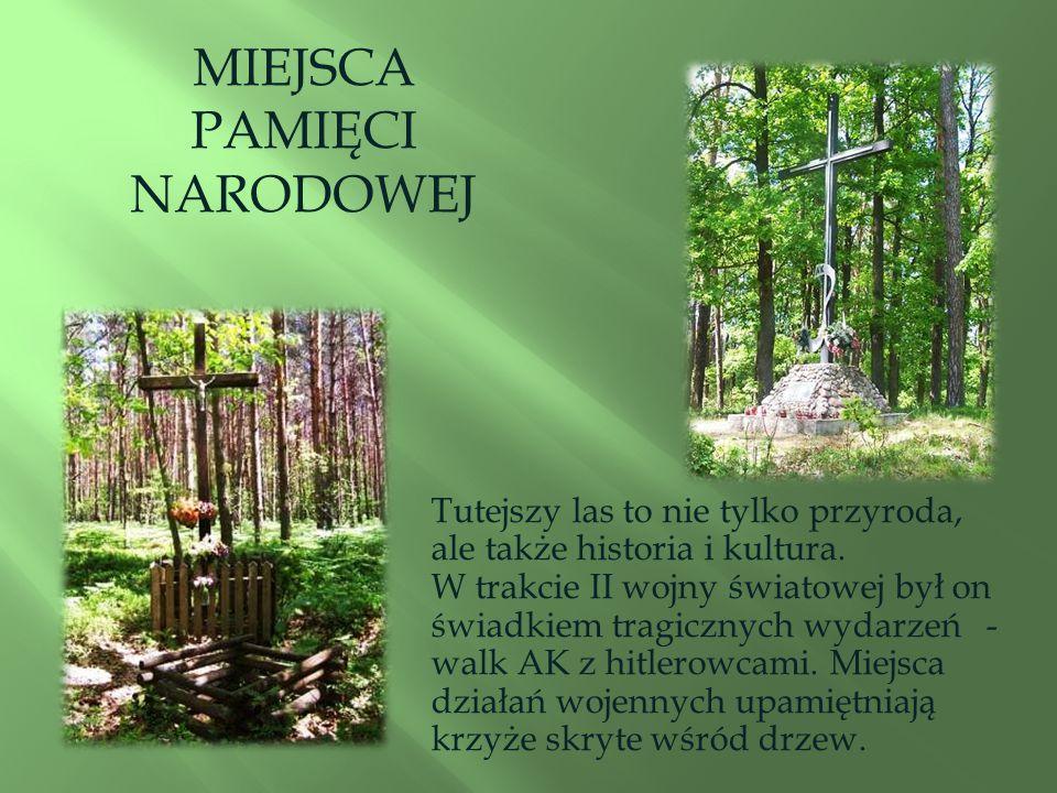 Tutejszy las to nie tylko przyroda, ale także historia i kultura.