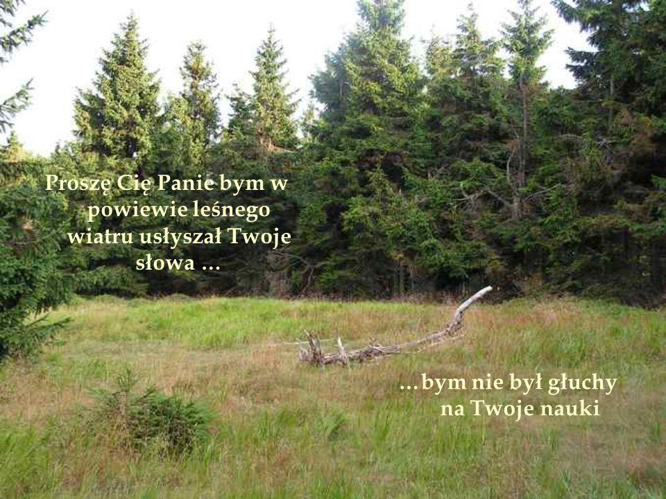 Proszę Cię Panie bym w powiewie leśnego wiatru usłyszał Twoje słowa … …bym nie był głuchy na Twoje nauki