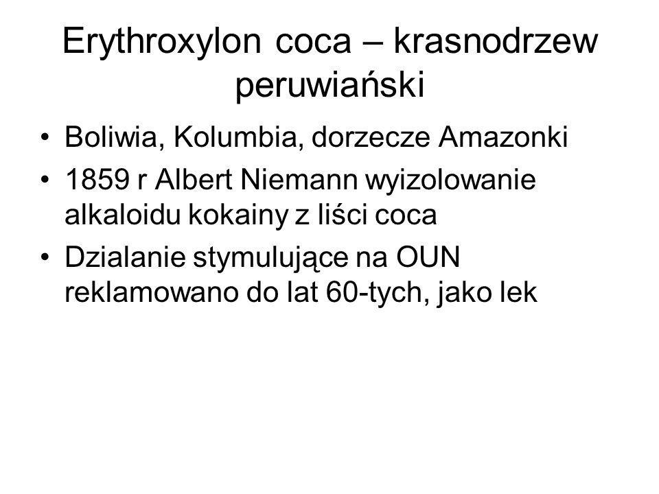 Erythroxylon coca – krasnodrzew peruwiański Boliwia, Kolumbia, dorzecze Amazonki 1859 r Albert Niemann wyizolowanie alkaloidu kokainy z liści coca Dzialanie stymulujące na OUN reklamowano do lat 60-tych, jako lek