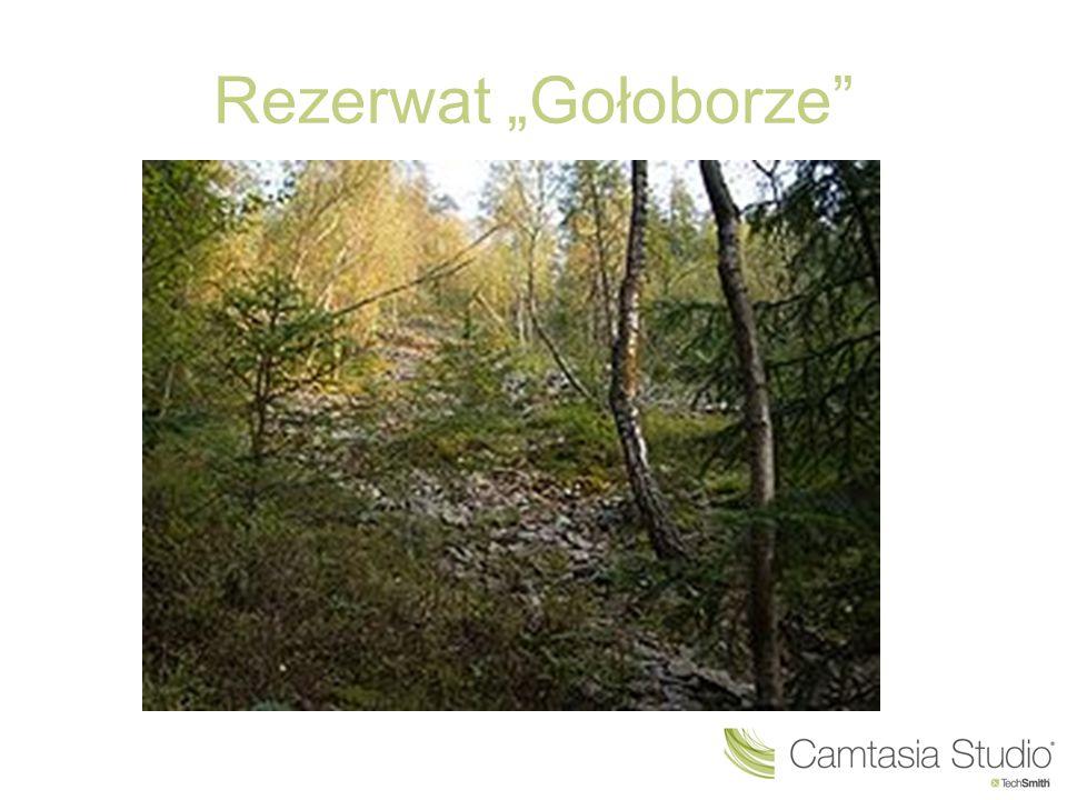"""Rezerwat """"Gołoborze"""""""