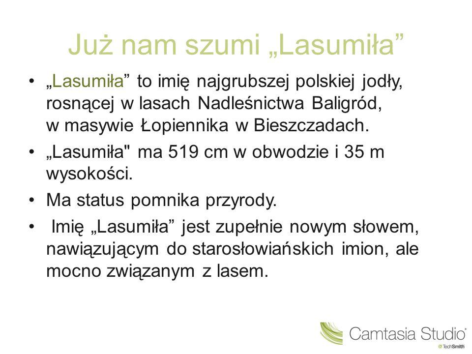 """Już nam szumi """"Lasumiła"""" """"Lasumiła"""" to imię najgrubszej polskiej jodły, rosnącej w lasach Nadleśnictwa Baligród, w masywie Łopiennika w Bieszczadach."""