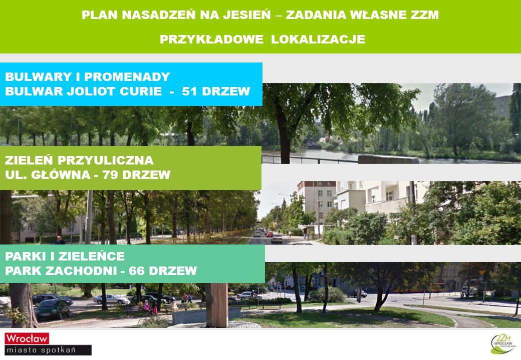BULWARY I PROMENADY BULWAR JOLIOT CURIE - 51 DRZEW ZIELEŃ PRZYULICZNA UL.