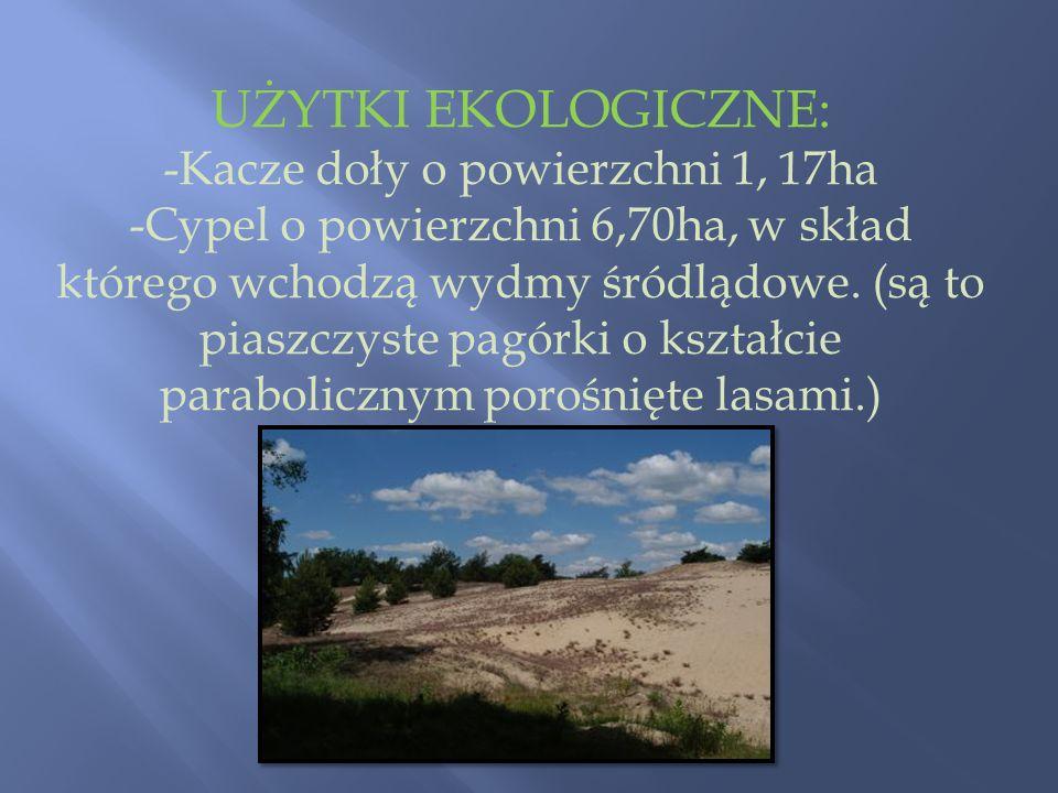 UŻYTKI EKOLOGICZNE: -Kacze doły o powierzchni 1, 17ha -Cypel o powierzchni 6,70ha, w skład którego wchodzą wydmy śródlądowe. (są to piaszczyste pagórk