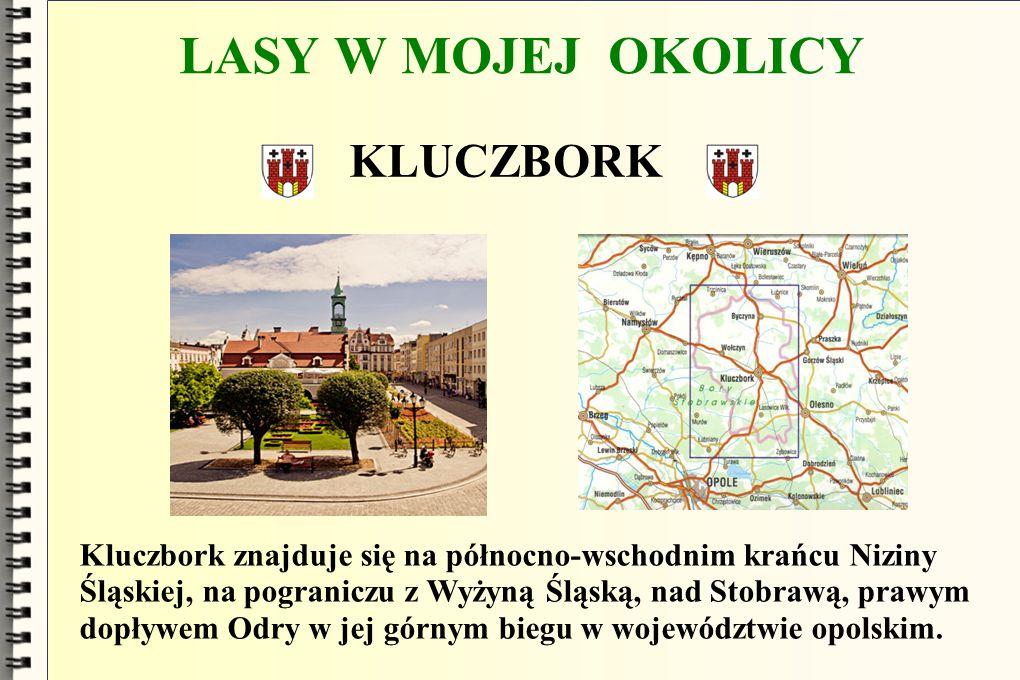 LASY W MOJEJ OKOLICY KLUCZBORK Kluczbork znajduje się na północno-wschodnim krańcu Niziny Śląskiej, na pograniczu z Wyżyną Śląską, nad Stobrawą, prawy