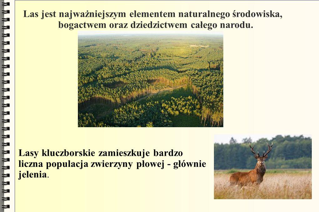 Las jest najważniejszym elementem naturalnego środowiska, bogactwem oraz dziedzictwem całego narodu. Lasy kluczborskie zamieszkuje bardzo liczna popul