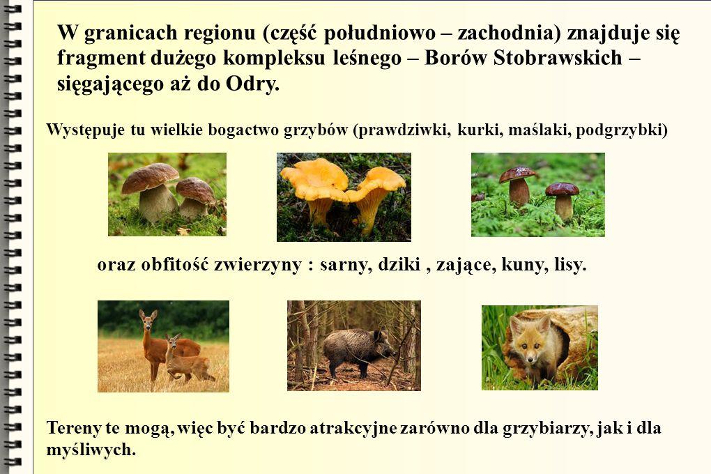 W granicach regionu (część południowo – zachodnia) znajduje się fragment dużego kompleksu leśnego – Borów Stobrawskich – sięgającego aż do Odry. Wystę