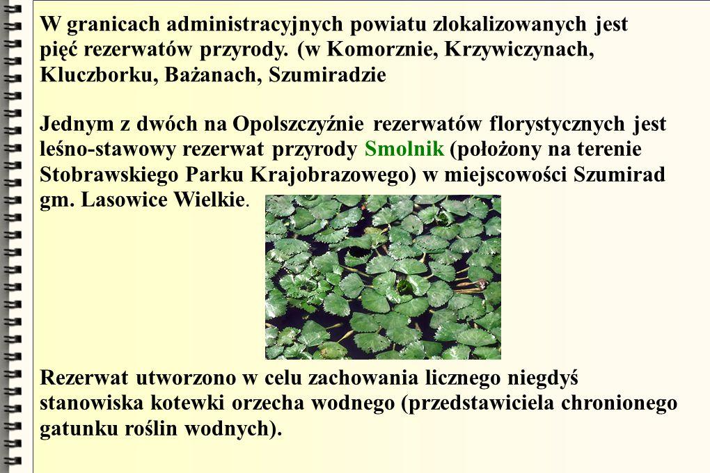 W granicach administracyjnych powiatu zlokalizowanych jest pięć rezerwatów przyrody. (w Komorznie, Krzywiczynach, Kluczborku, Bażanach, Szumiradzie Je