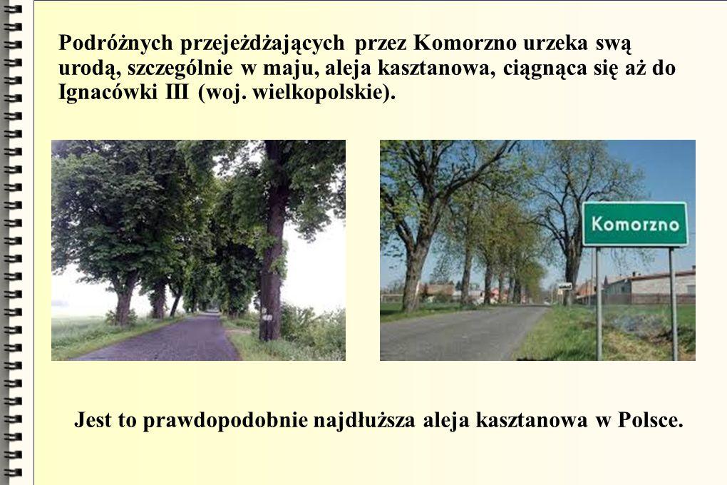 Podróżnych przejeżdżających przez Komorzno urzeka swą urodą, szczególnie w maju, aleja kasztanowa, ciągnąca się aż do Ignacówki III (woj. wielkopolski