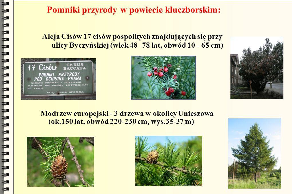 Pomniki przyrody w powiecie kluczborskim: Aleja Cisów 17 cisów pospolitych znajdujących się przy ulicy Byczyńskiej (wiek 48 -78 lat, obwód 10 - 65 cm)