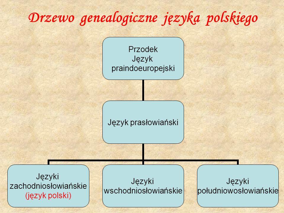 Drzewo genealogiczne języka polskiego Przodek Język praindoeuropejski Język prasłowiański Języki zachodniosłowiańskie (język polski) Języki wschodnios