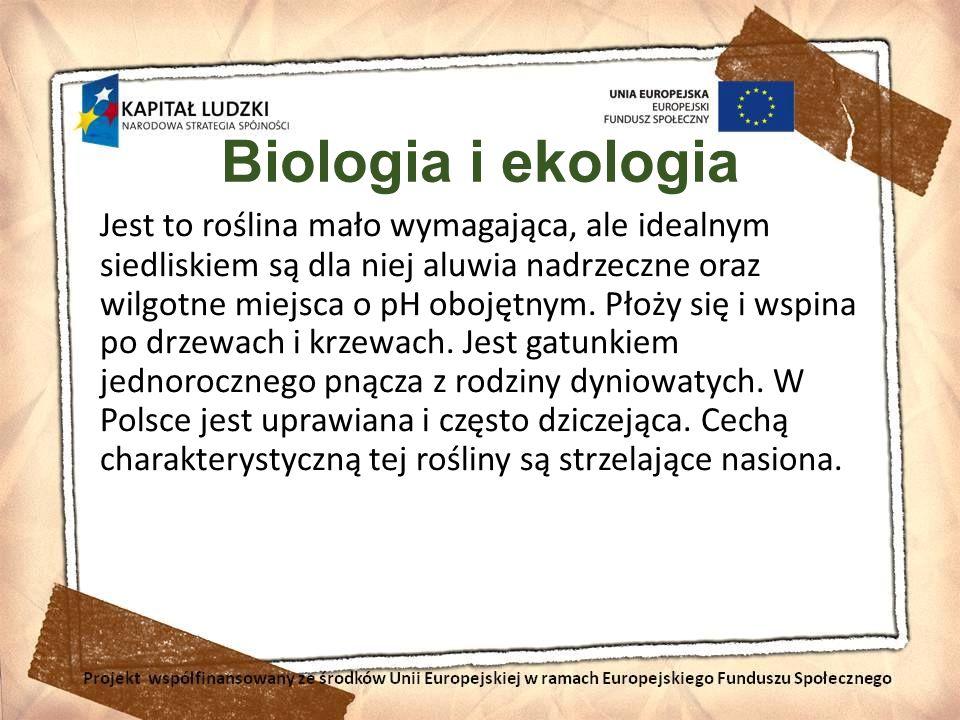 Biologia i ekologia Jest to roślina mało wymagająca, ale idealnym siedliskiem są dla niej aluwia nadrzeczne oraz wilgotne miejsca o pH obojętnym. Płoż