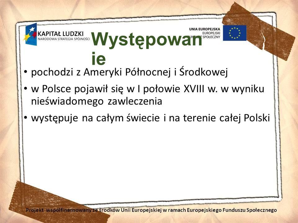 Występowan ie pochodzi z Ameryki Północnej i Środkowej w Polsce pojawił się w I połowie XVIII w. w wyniku nieświadomego zawleczenia występuje na całym