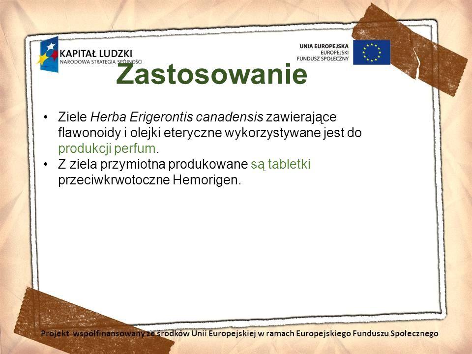 Zastosowanie Ziele Herba Erigerontis canadensis zawierające flawonoidy i olejki eteryczne wykorzystywane jest do produkcji perfum. Z ziela przymiotna