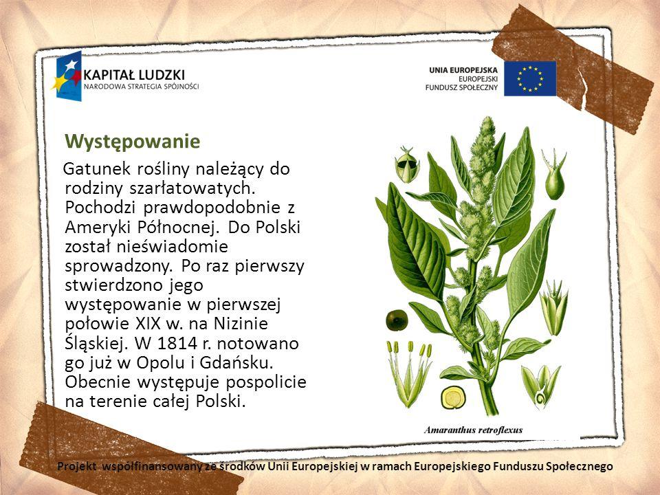 Występowanie Gatunek rośliny należący do rodziny szarłatowatych. Pochodzi prawdopodobnie z Ameryki Północnej. Do Polski został nieświadomie sprowadzon