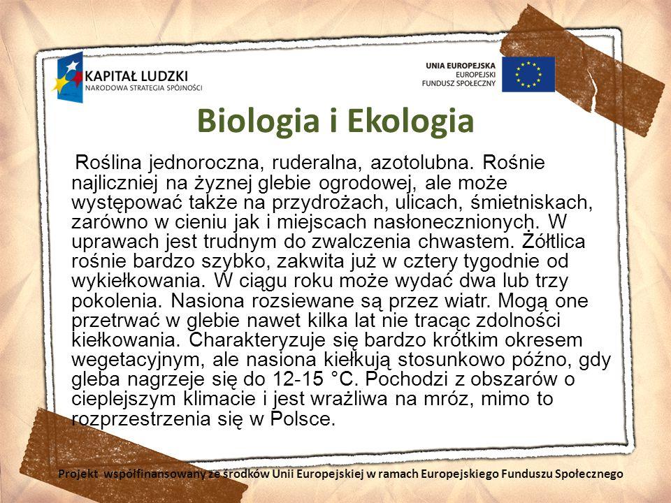 Biologia i Ekologia Roślina jednoroczna, ruderalna, azotolubna. Rośnie najliczniej na żyznej glebie ogrodowej, ale może występować także na przydrożac