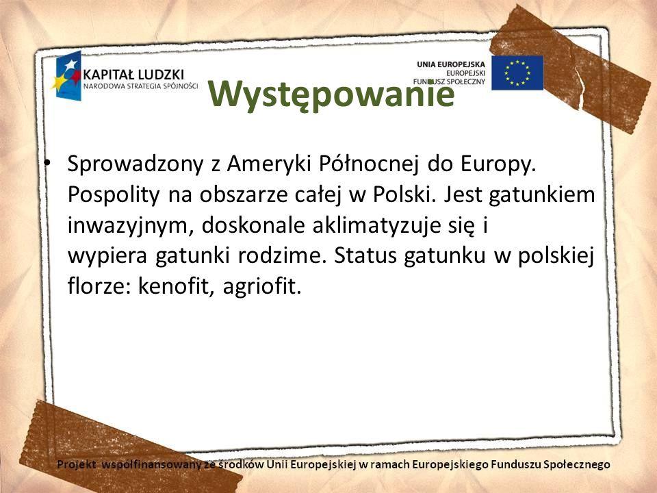 Występowanie Sprowadzony z Ameryki Północnej do Europy. Pospolity na obszarze całej w Polski. Jest gatunkiem inwazyjnym, doskonale aklimatyzuje się i