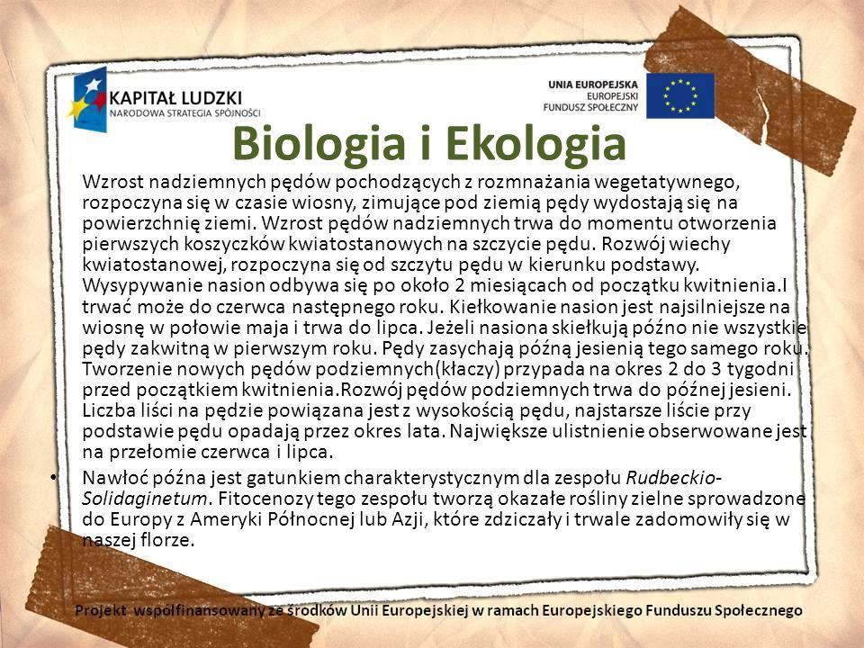 Biologia i Ekologia Wzrost nadziemnych pędów pochodzących z rozmnażania wegetatywnego, rozpoczyna się w czasie wiosny, zimujące pod ziemią pędy wydost