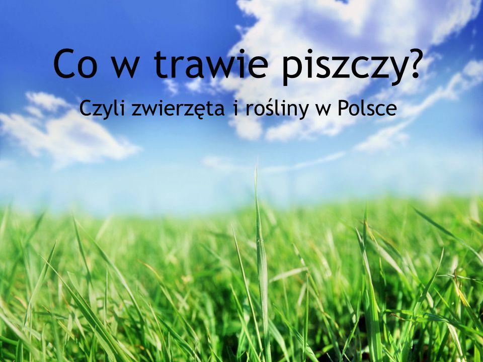 Co w trawie piszczy? Czyli zwierzęta i rośliny w Polsce