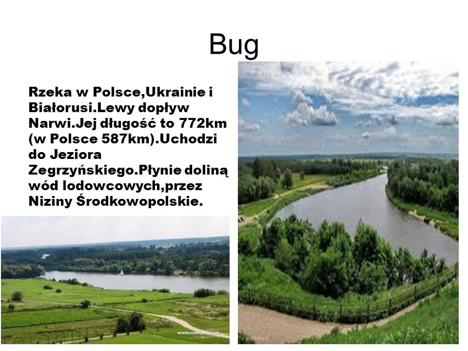 Bug Rzeka w Polsce,Ukrainie i Białorusi.Lewy dopływ Narwi.Jej długość to 772km (w Polsce 587km).Uchodzi do Jeziora Zegrzyńskiego.Płynie doliną wód lodowcowych,przez Niziny Środkowopolskie.