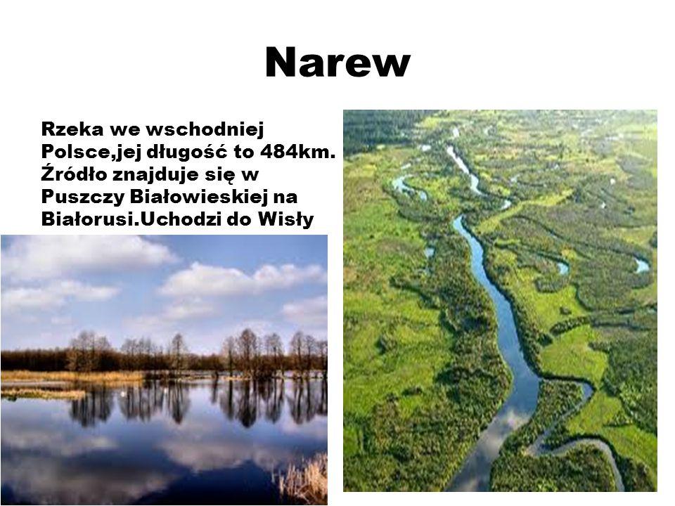 Narew Rzeka we wschodniej Polsce,jej długość to 484km.