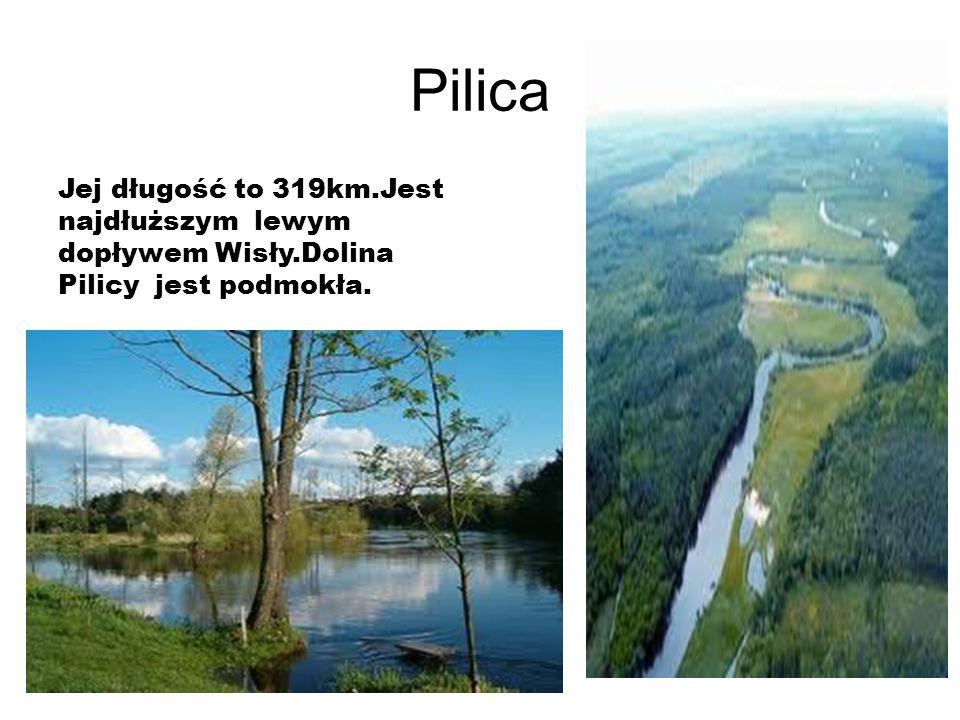 Pilica Jej długość to 319km.Jest najdłuższym lewym dopływem Wisły.Dolina Pilicy jest podmokła.
