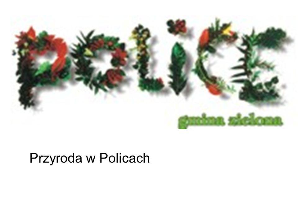PUSZCZA WKRZAŃSKA to jeden z najpiękniejszych kompleksów leśnych w Polsce.