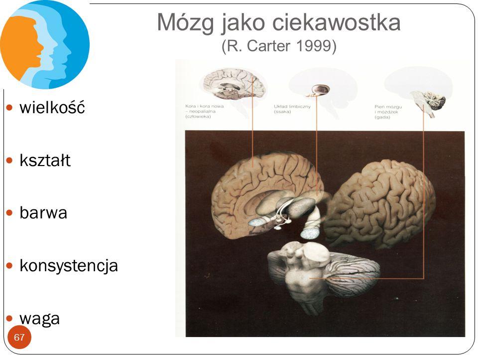 Mózg jako ciekawostka (R. Carter 1999) 67 wielkość kształt barwa konsystencja waga