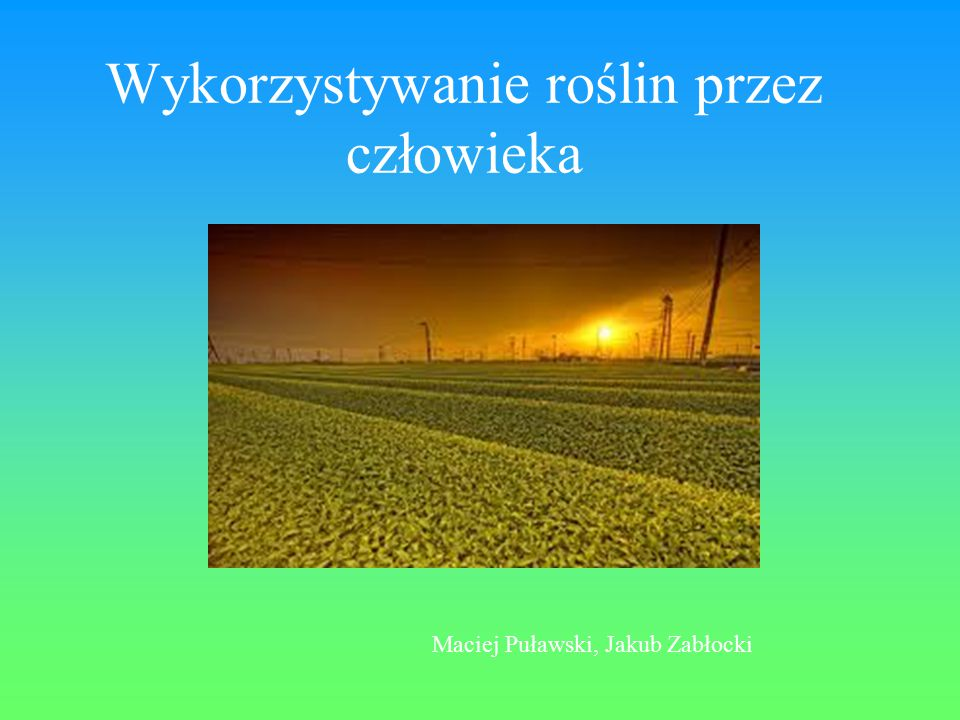 Wykorzystywanie roślin przez człowieka Maciej Puławski, Jakub Zabłocki