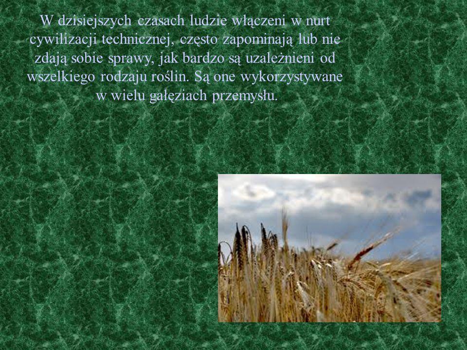 Rośliny lecznicze Przez wiele lat leki naturalne, przede wszystkim zaś rośliny lecznicze, były główną, a nawet jedyną bronią w ręku lekarza oraz jedynym surowcem do wyrobu leków.