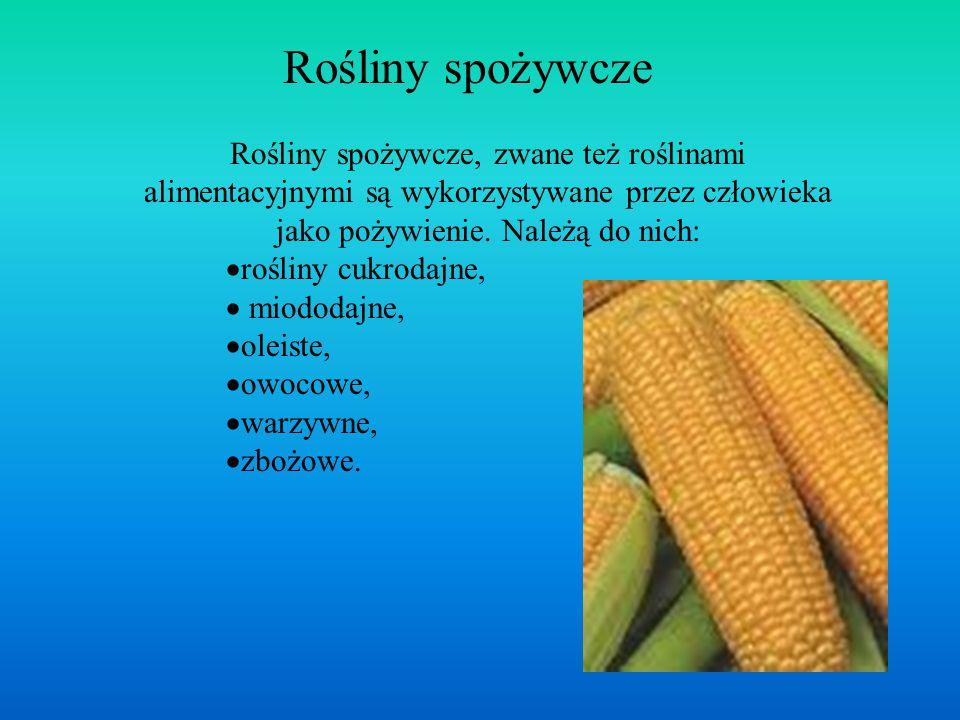 Rośliny spożywcze Rośliny spożywcze, zwane też roślinami alimentacyjnymi są wykorzystywane przez człowieka jako pożywienie. Należą do nich:  rośliny