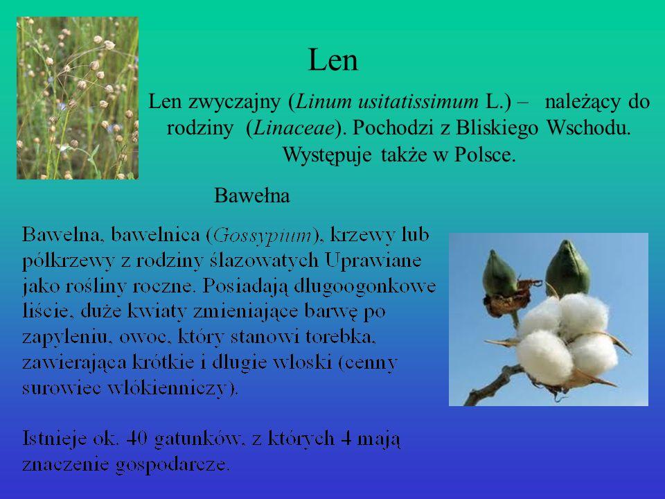 Len Len zwyczajny (Linum usitatissimum L.) – należący do rodziny (Linaceae). Pochodzi z Bliskiego Wschodu. Występuje także w Polsce. Bawełna