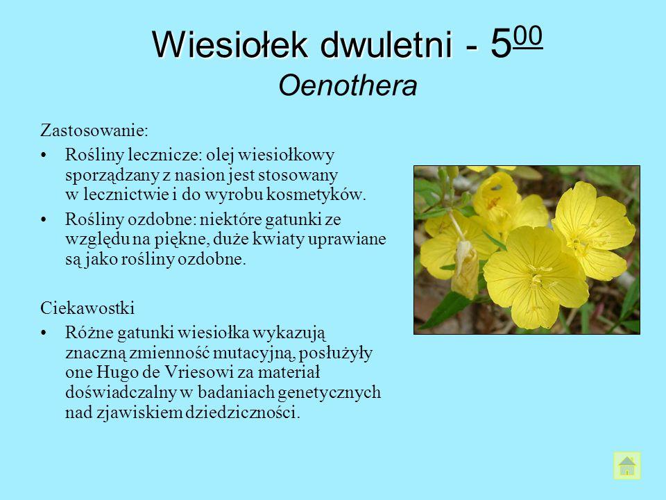 Wiesiołek dwuletni - Wiesiołek dwuletni - 5 00 Oenothera Zastosowanie: Rośliny lecznicze: olej wiesiołkowy sporządzany z nasion jest stosowany w leczn
