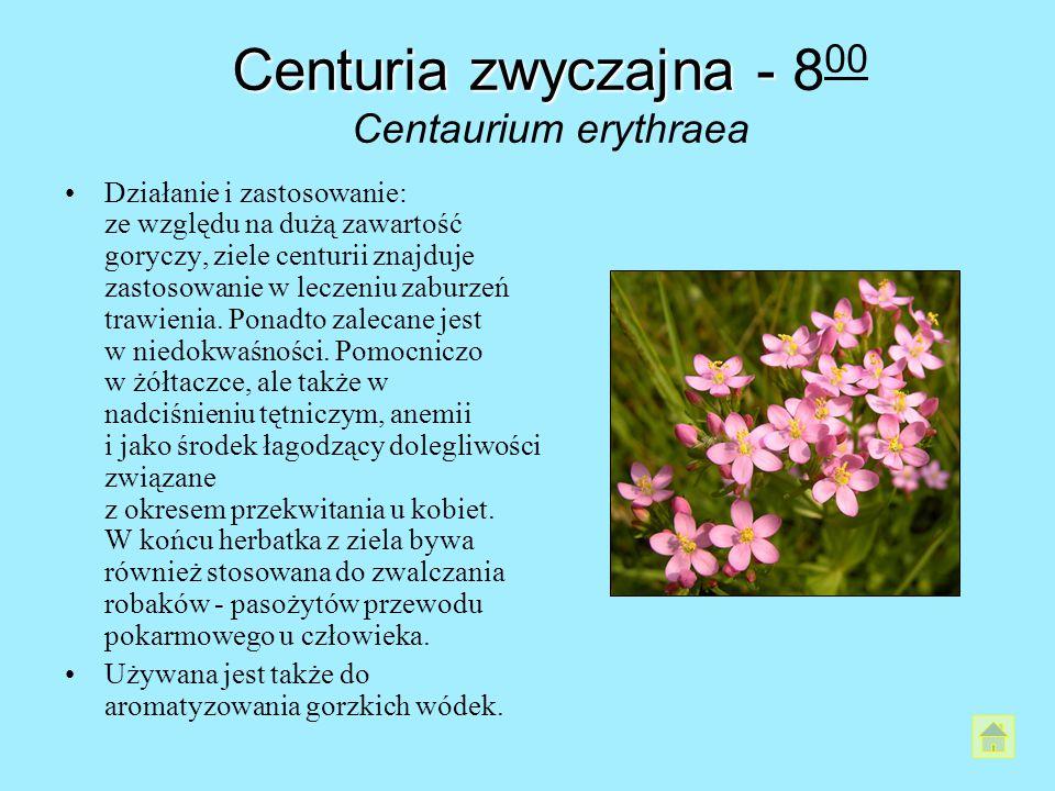 Centuria zwyczajna - Centuria zwyczajna - 8 00 Centaurium erythraea Działanie i zastosowanie: ze względu na dużą zawartość goryczy, ziele centurii zna