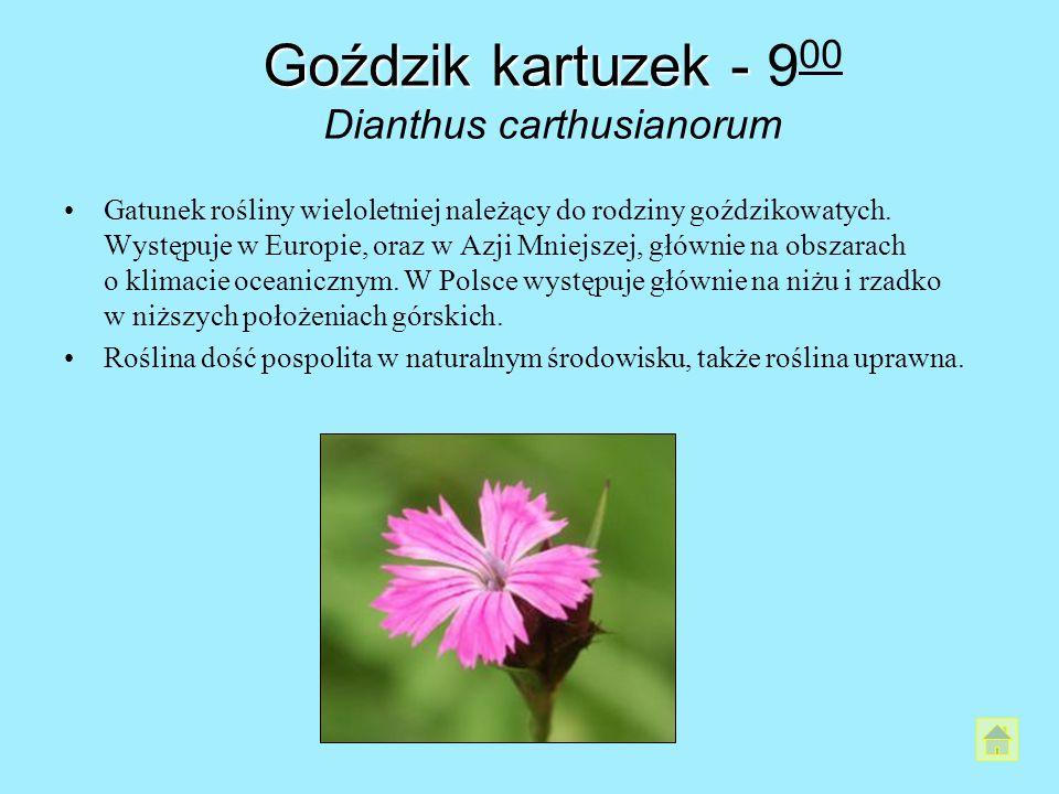 Goździk kartuzek - Goździk kartuzek - 9 00 Dianthus carthusianorum Gatunek rośliny wieloletniej należący do rodziny goździkowatych. Występuje w Europi