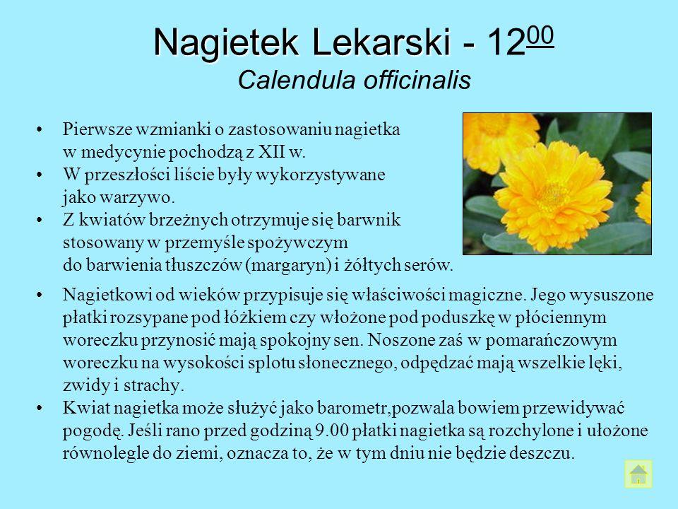 Nagietek Lekarski- Nagietek Lekarski - 12 00 Calendula officinalis Nagietkowi od wieków przypisuje się właściwości magiczne. Jego wysuszone płatki roz
