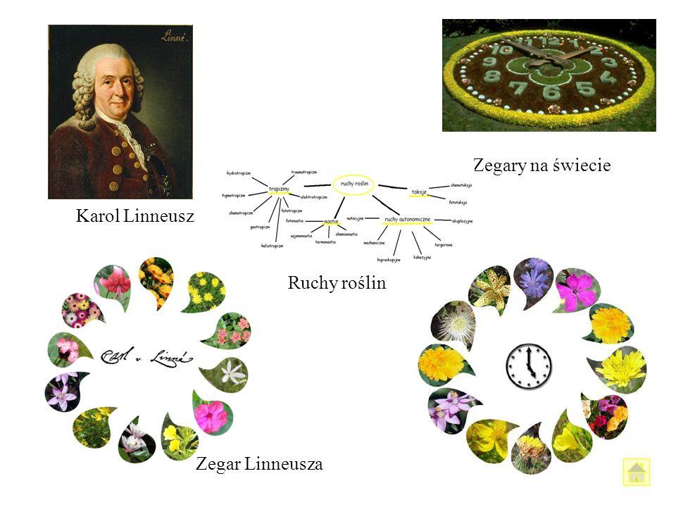 Zegary na świecie Karol Linneusz Ruchy roślin Zegar Linneusza