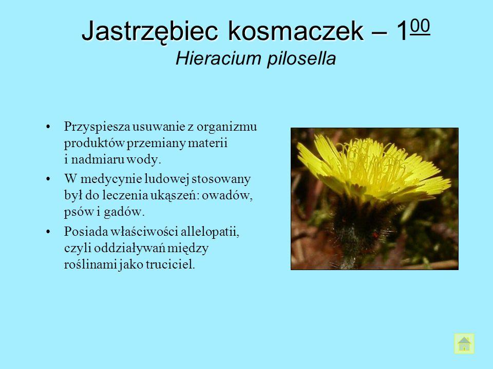 Jastrzębiec kosmaczek– Jastrzębiec kosmaczek – 1 00 Hieracium pilosella Przyspiesza usuwanie z organizmu produktów przemiany materii i nadmiaru wody.