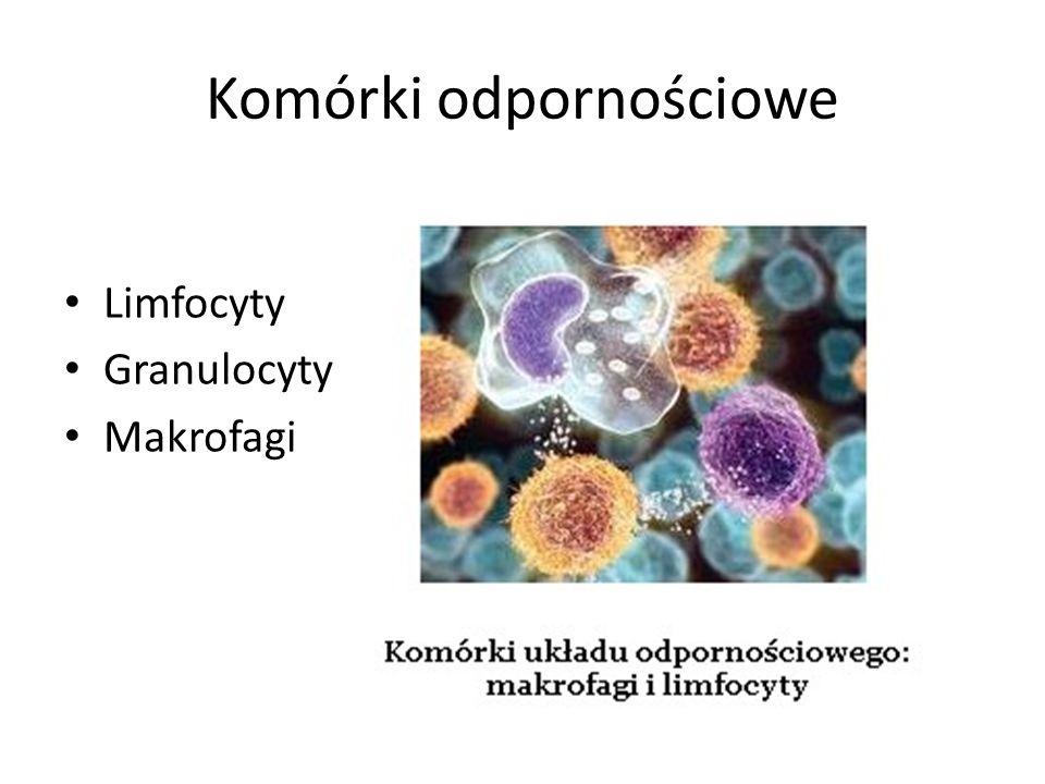 Komórki odpornościowe Limfocyty Granulocyty Makrofagi