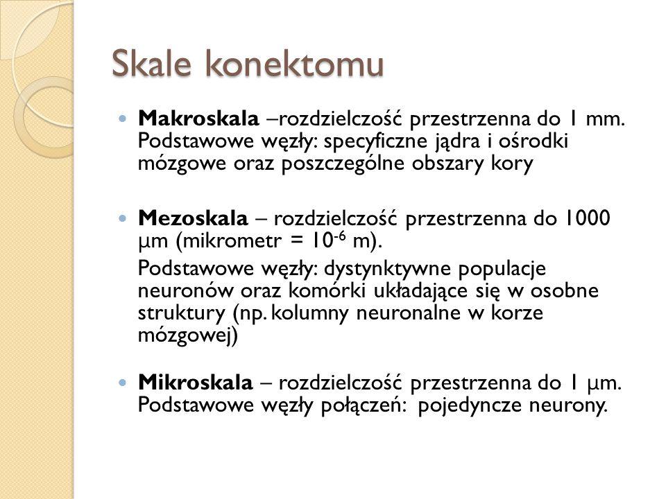 Skale konektomu Makroskala –rozdzielczość przestrzenna do 1 mm. Podstawowe węzły: specyficzne jądra i ośrodki mózgowe oraz poszczególne obszary kory M