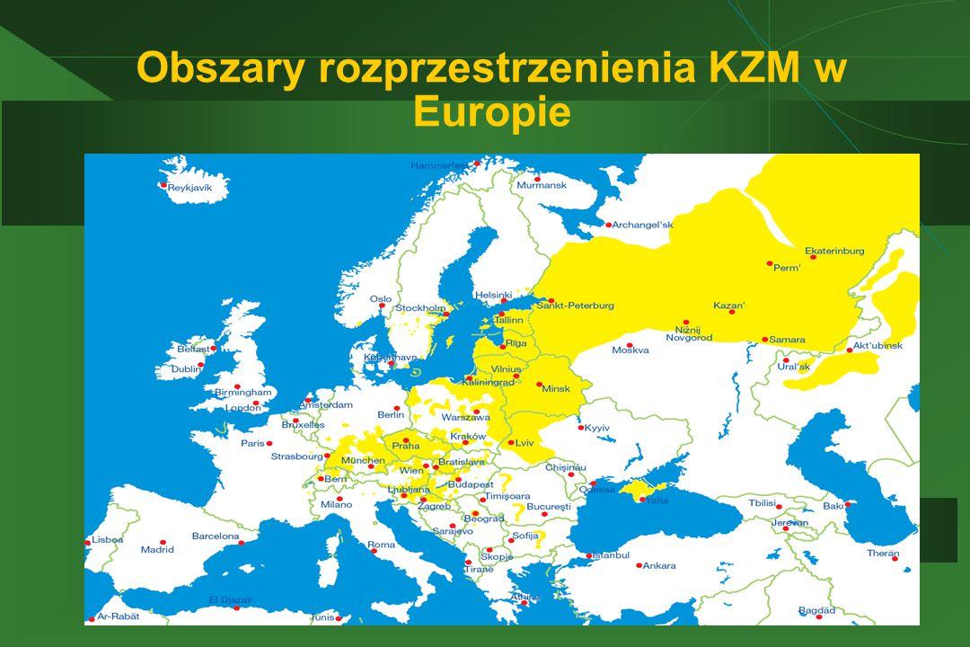 Obszary rozprzestrzenienia KZM w Europie