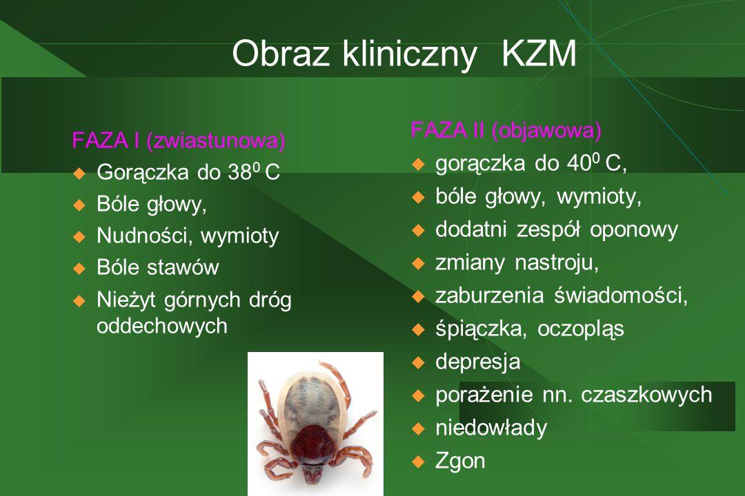 Obraz kliniczny KZM FAZA I (zwiastunowa)  Gorączka do 38 0 C  Bóle głowy,  Nudności, wymioty  Bóle stawów  Nieżyt górnych dróg oddechowych FAZA I