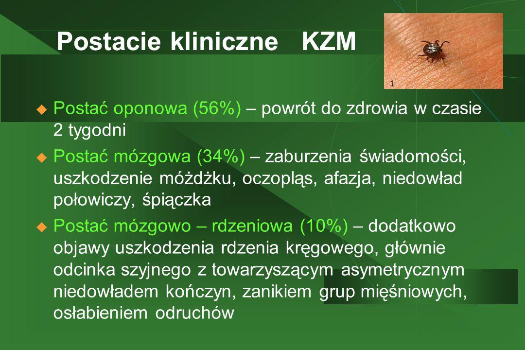 Postacie kliniczne KZM  Postać oponowa (56%) – powrót do zdrowia w czasie 2 tygodni  Postać mózgowa (34%) – zaburzenia świadomości, uszkodzenie móżd