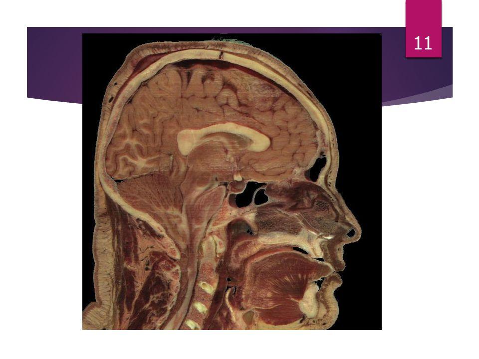 Co wpływa na uczucie łaknienia?  Na regulację łaknienia mają wpływ sygnały pochodzące ze źródeł zarówno obwodowych, jak i ośrodkowych. Ośrodkiem zbie