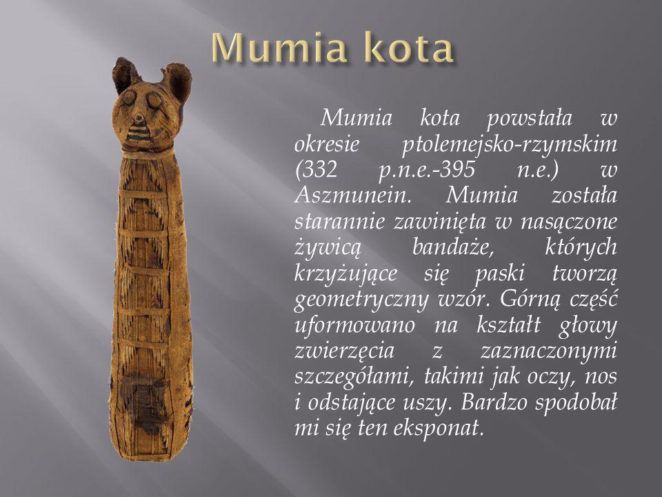 Mumia kota powstała w okresie ptolemejsko-rzymskim (332 p.n.e.-395 n.e.) w Aszmunein. Mumia została starannie zawinięta w nasączone żywicą bandaże, kt