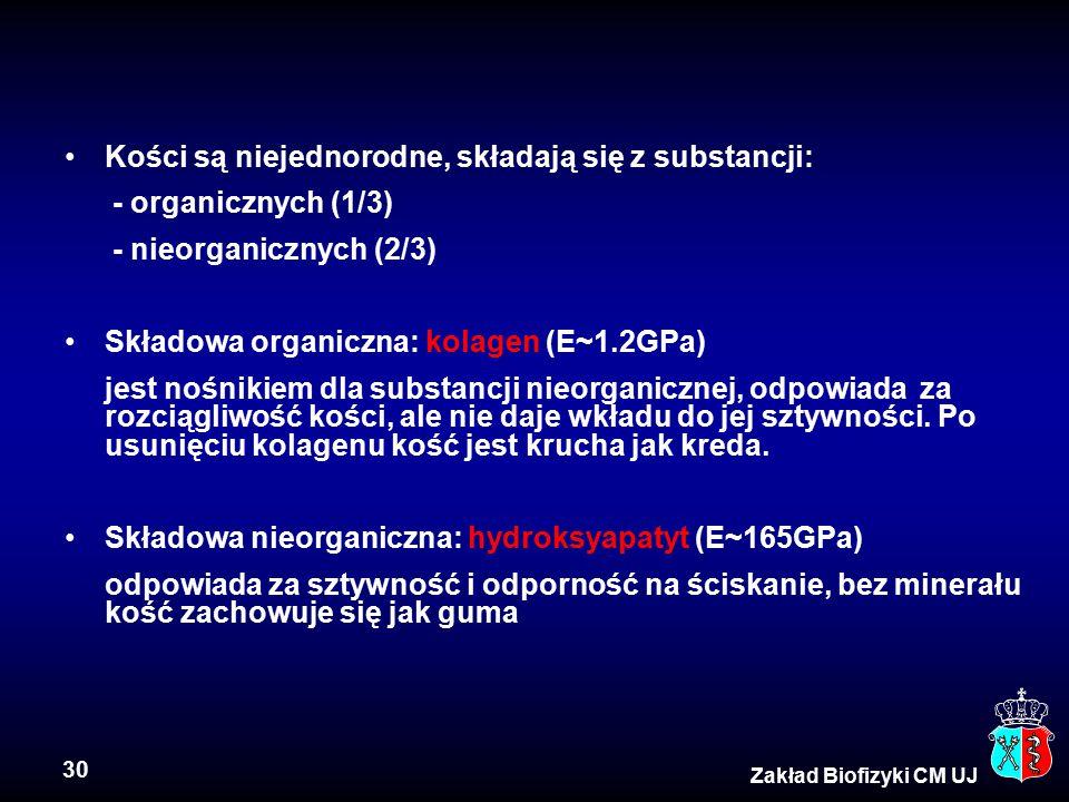 30 Zakład Biofizyki CM UJ Kości są niejednorodne, składają się z substancji: - organicznych (1/3) - nieorganicznych (2/3) Składowa organiczna: kolagen